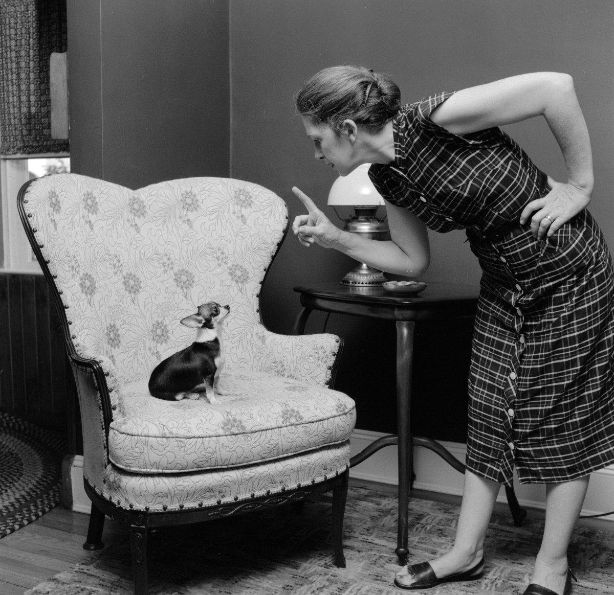 circa 1955: A woman teaches her pet chihuahua good manners with a stern reproof. (Photo by Three Lions/Getty Images)