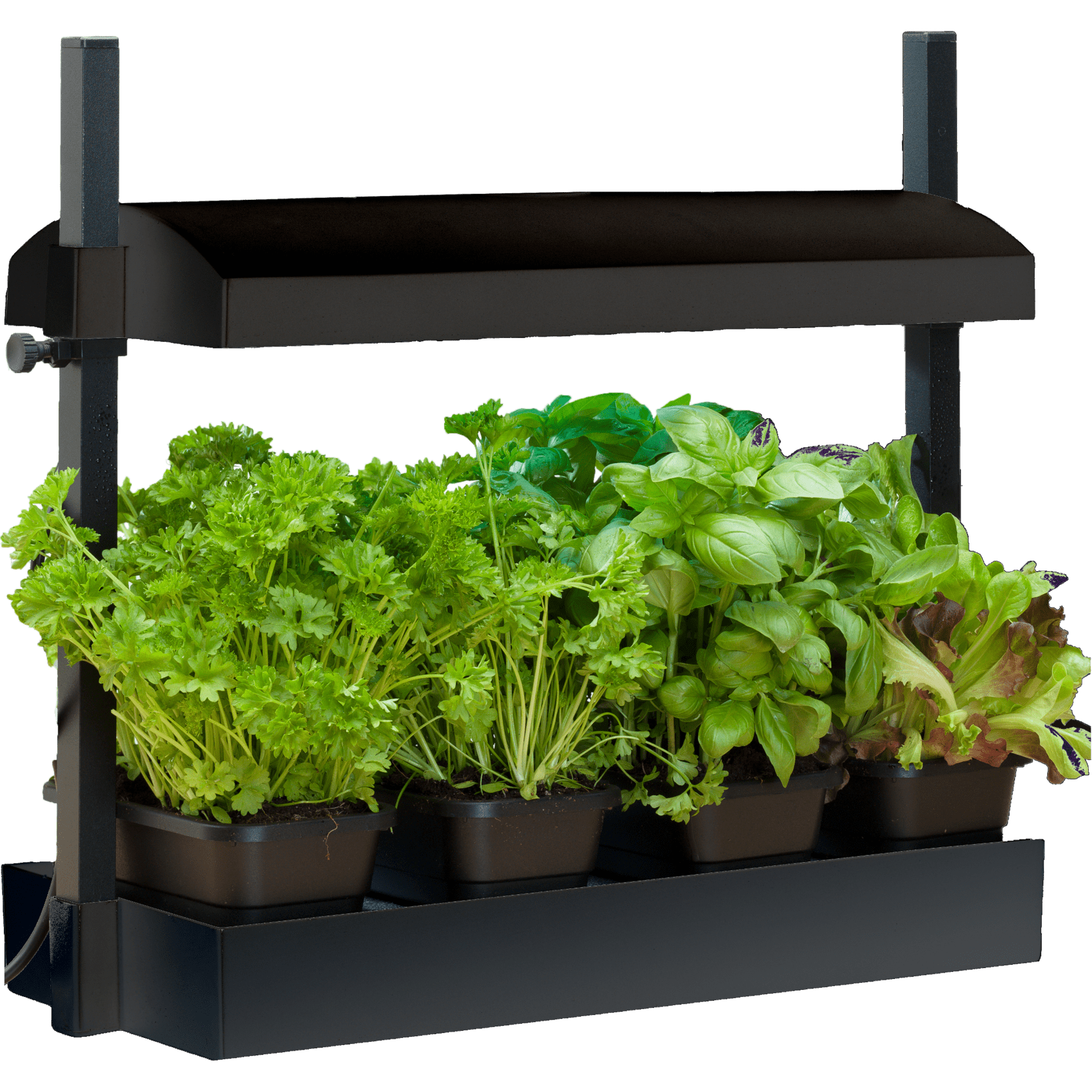 8 Indoor Garden Kits That You Can Still Order Online Daily Front Row